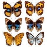 Coleção de borboletas coloridas Fotos de Stock Royalty Free