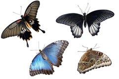 Coleção de borboletas coloridas Foto de Stock