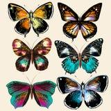 Coleção de borboletas coloridas do vetor no estilo do vintage Imagem de Stock Royalty Free