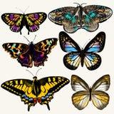 Coleção de borboletas coloridas do vetor no estilo do vintage Fotos de Stock Royalty Free