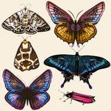 Coleção de borboletas coloridas do vetor no estilo do vintage Fotografia de Stock Royalty Free