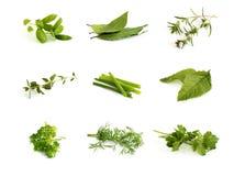 Coleção de ervas aromáticas Imagens de Stock