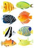 Coleção de peixes tropicais Fotografia de Stock Royalty Free
