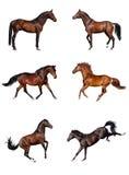 Coleção do cavalo Foto de Stock Royalty Free