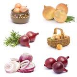 Coleção do vegetal da cebola Imagem de Stock