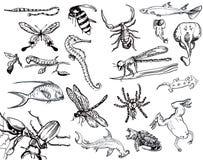 Coleção dos animais Imagem de Stock Royalty Free