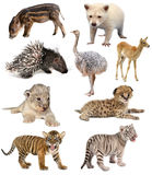 Coleção dos animais do bebê Fotos de Stock
