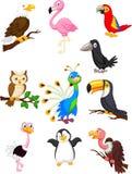 Coleção dos desenhos animados do pássaro Imagem de Stock