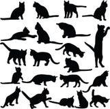 Coleção dos gatos Fotografia de Stock