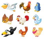 Coleção dos pássaros Foto de Stock