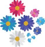 Coleção simples da margarida da flor isolada no branco Imagens de Stock Royalty Free