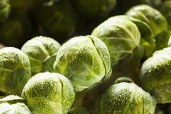 Coles de Bruselas orgánicas verdes crudas Foto de archivo libre de regalías