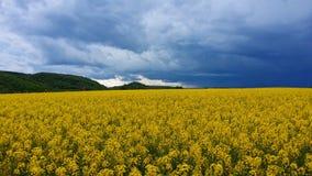 Coles-Feld Lizenzfreies Stockfoto