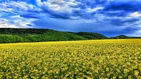 Coles Field Stock Image