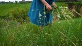 Coleta da menina flores no prado vídeos de arquivo