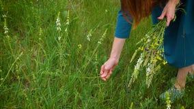 Coleta da menina flores no prado video estoque