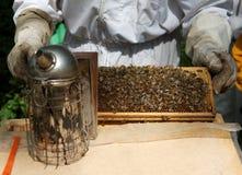 Coletando o mel Imagem de Stock