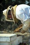 Coletando o mel para Rosh Hashana Foto de Stock Royalty Free