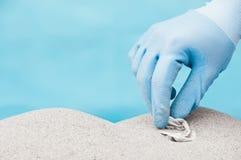 Coletando o plástico em uma praia Fotos de Stock