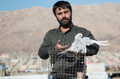 Coletor da pomba que mostra seu pássaro Foto de Stock