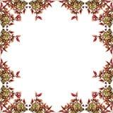Coleus leaves frame Royalty Free Stock Photo