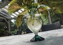 Coleusväxten med rotar i exponeringsglas Royaltyfria Foton