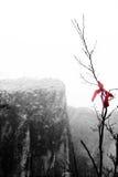 Colgado en las ramas de los carámbanos de la fantasía del invierno Fotos de archivo libres de regalías