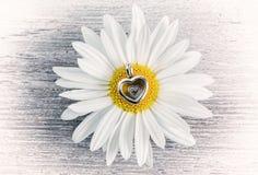 Colgante - flor del corazón y de la manzanilla Imagen de archivo libre de regalías
