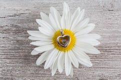 Colgante - flor del corazón y de la manzanilla Imágenes de archivo libres de regalías