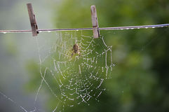 Colgante hacia fuera de mi web de araña para secarse Imagen de archivo libre de regalías