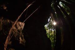 Colgante largo de las raíces del árbol Fotografía de archivo libre de regalías