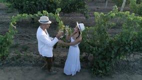 Colha as uvas, opinião aérea do zangão em pares de winemakers que provam o vinho branco no vinhedo dos glassess exteriores filme