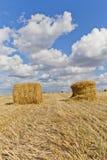 Colha a paisagem com os pacotes da palha entre campos no outono foto de stock