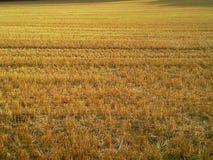 A colheita acaba-se Foto de Stock