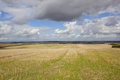 Colheita agrícola imagens de stock royalty free