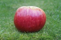 Colheita Apple de Autum Foto de Stock Royalty Free
