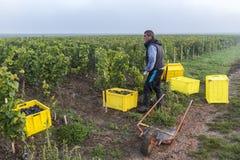 Colheita Campagne do trabalhador em Verzernay Fotografia de Stock Royalty Free