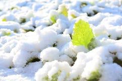 Colheita congelada Fotografia de Stock Royalty Free