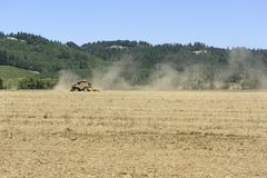 Colheita crescida Oregon no vale de Willamette, Marion County da grama de Rye Foto de Stock