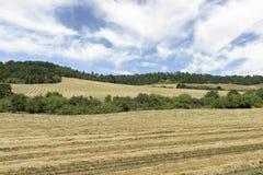 Colheita crescida Oregon no vale de Willamette, Marion County do Ryegrass fotos de stock