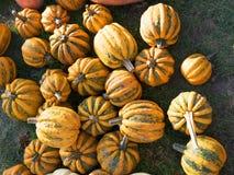 Colheita da abóbora Abóboras de Halloween Fundo rústico rural do outono com abóbora vegetal Fotografia de Stock