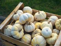 Colheita da abóbora Abóboras de Halloween Fundo rústico rural do outono com abóbora vegetal Imagens de Stock Royalty Free