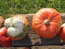 Colheita da abóbora Abóboras de Halloween Fundo rústico rural do outono com abóbora vegetal Imagens de Stock