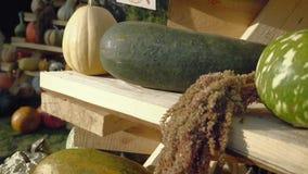 Colheita da abóbora Abóboras de Halloween Fundo rústico rural do outono com abóbora vegetal filme