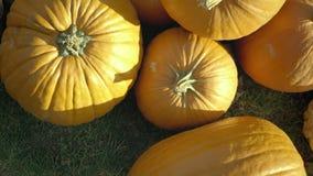 Colheita da abóbora Abóboras de Halloween Fundo rústico rural do outono com abóbora vegetal vídeos de arquivo