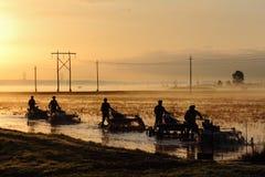 Colheita da airela do amanhecer Imagens de Stock