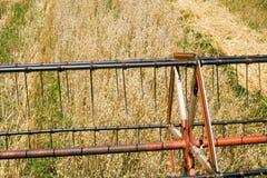 Colheita da aveia Foto de Stock