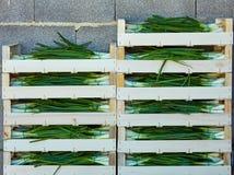 Colheita da cebola empilhada em umas caixas de madeira da cesta Fotos de Stock Royalty Free