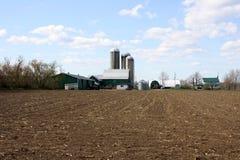 Colheita da ensilagem da colheita do milho no campo de exploração agrícola estéril Foto de Stock Royalty Free