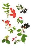 Colheita da fruta do outono imagem de stock royalty free